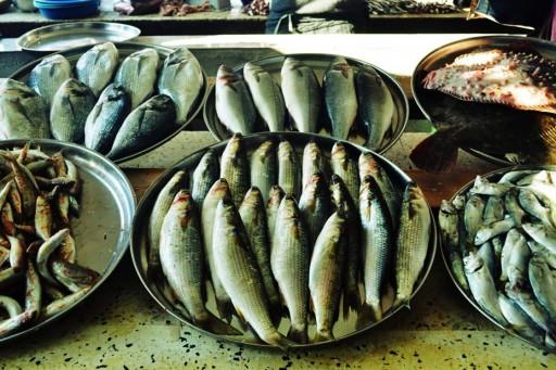 Маршрут: Рыбный день :)